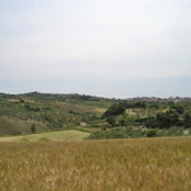 Rotello landscape